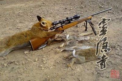 忽然,爸爸发现了躲藏在空心树里面的三只小狐狸.